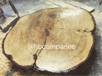 Saved  from  the  burn  pile,  this  55 inch  diameter  Canadian  Maple  was  decayed  to  the  point  of  risking  lives.  We  cut  it  and  dried  it  for  four  years,  and  now  it  will  become  a  table.